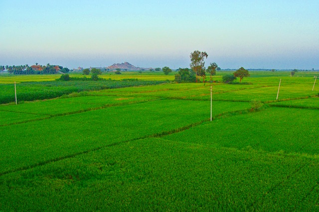 rice-fields-204113_640